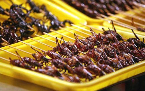 la-banane-qui-parle-mange-insectes-16