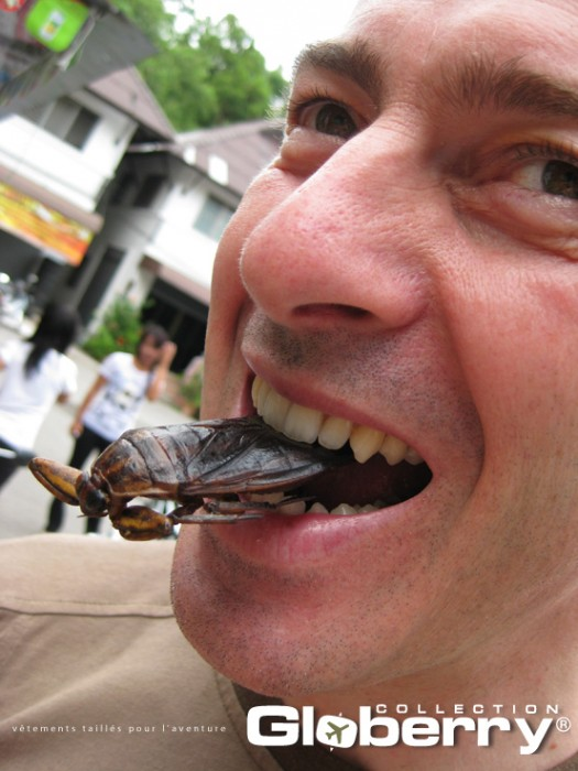 manger-des-insectes-en-survie-700-77432