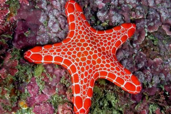 14 - Starfish