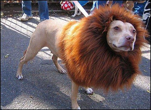 17 - Lion-postiche