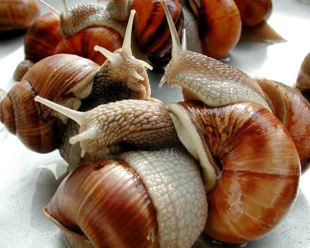 19 - escargot