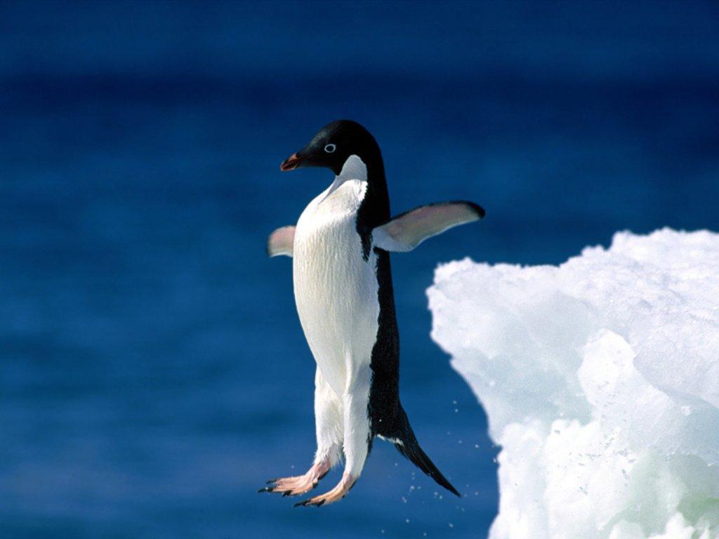 5 - Pingouin