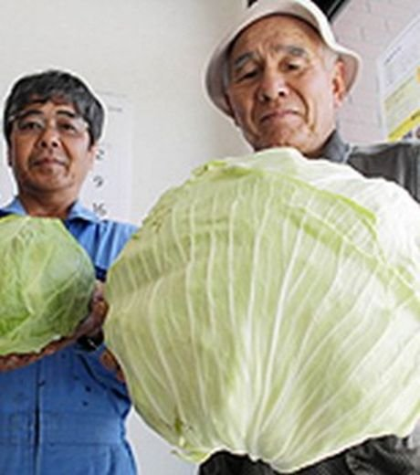 labananequiparle-fukushima-legumes10