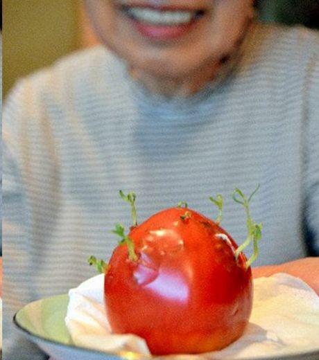 labananequiparle-fukushima-legumes12