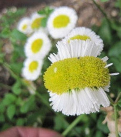 labananequiparle-fukushima-legumes16