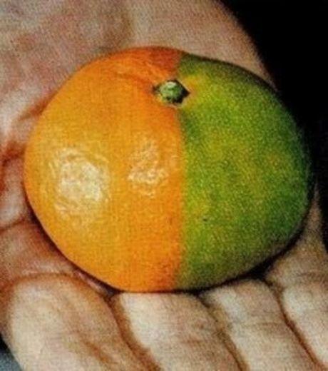 labananequiparle-fukushima-legumes7