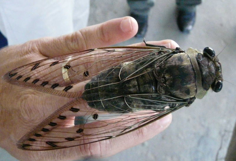 labananequiparle-insecte-geant-2