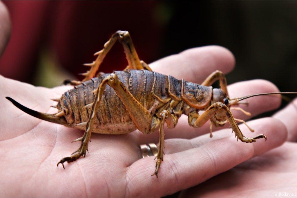 labananequiparle-insecte-geant-6