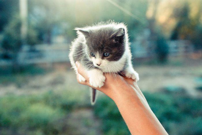 15 - bebes-animaux-trop-craquants-labananequiparle
