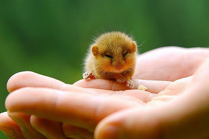 18 - bebes-animaux-trop-craquants-labananequiparle