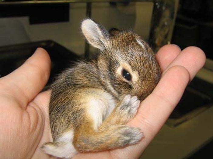 19 - bebes-animaux-trop-craquants-labananequiparle
