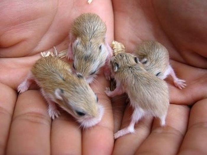 2 - bebes-animaux-trop-craquants-labananequiparle
