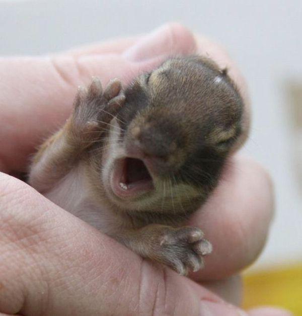 22 - bebes-animaux-trop-craquants-labananequiparle