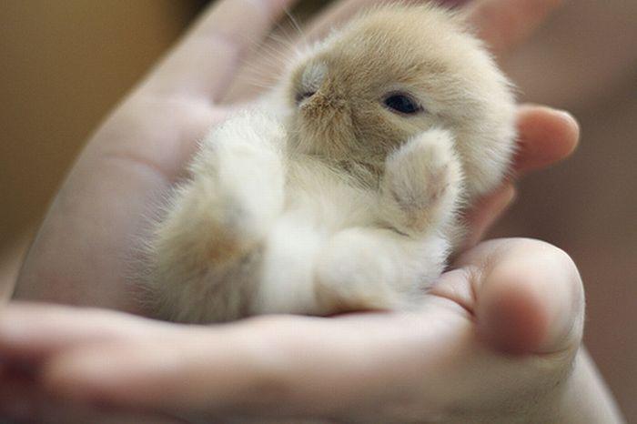 23 - bebes-animaux-trop-craquants-labananequiparle