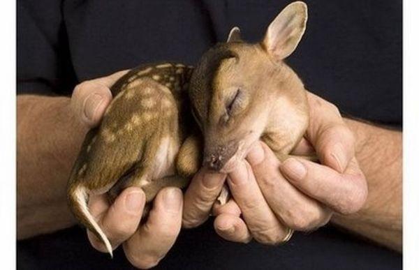 25 - bebes-animaux-trop-craquants-labananequiparle