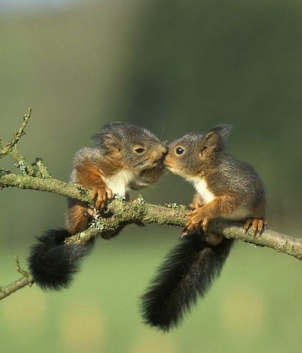 27 - bebes-animaux-trop-craquants-labananequiparle