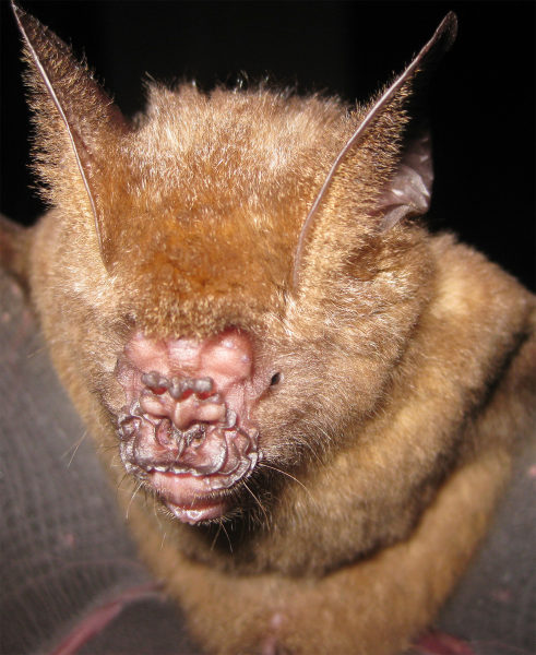 DWP new bat species 280212