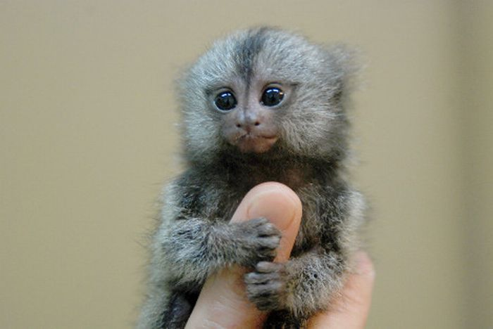 7 - bebes-animaux-trop-craquants-labananequiparle