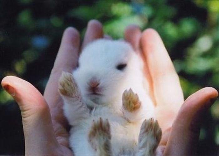 9 - bebes-animaux-trop-craquants-labananequiparle