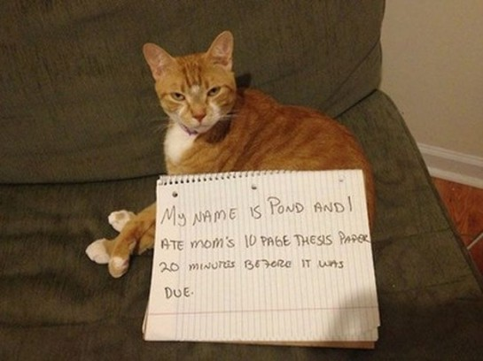 1 - cat-shaming-labananequiparle