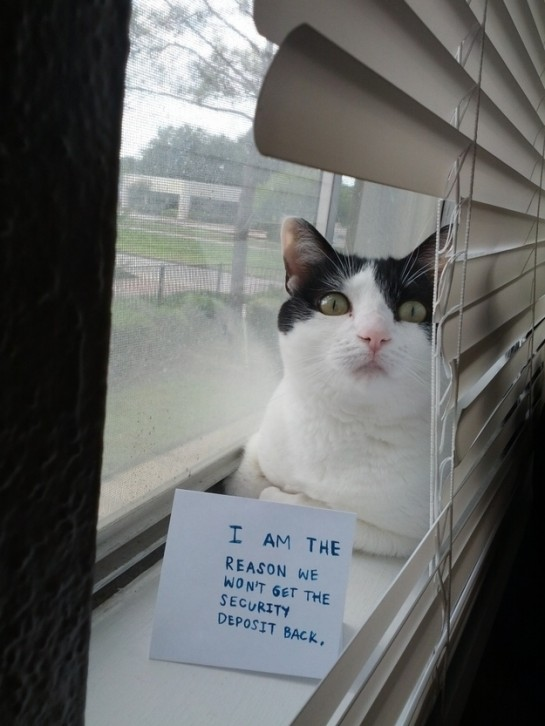 2 - cat-shaming-labananequiparle