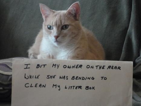 3 - cat-shaming-labananequiparle