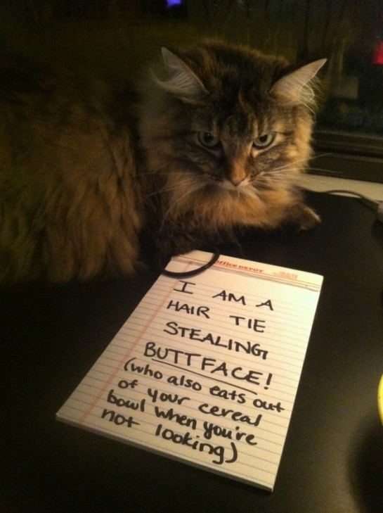 5 - cat-shaming-labananequiparle