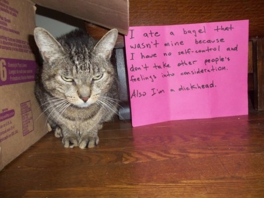 6 - cat-shaming-labananequiparle