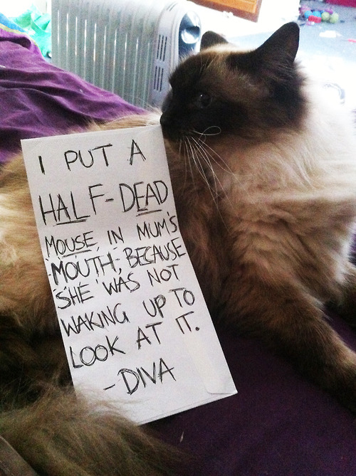7 - cat-shaming-labananequiparle