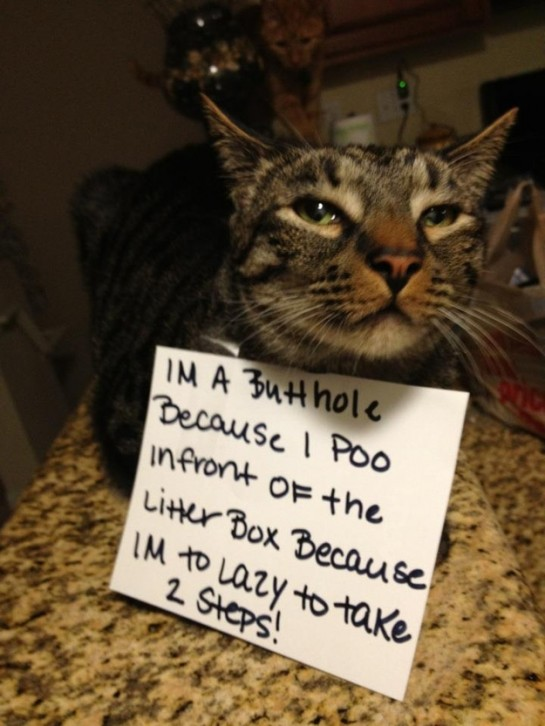 8 - cat-shaming-labananequiparle