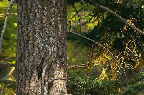 animal_camouflage_000