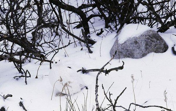 animal_camouflage_014