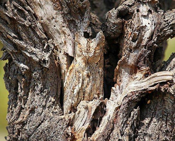 animal_camouflage_015