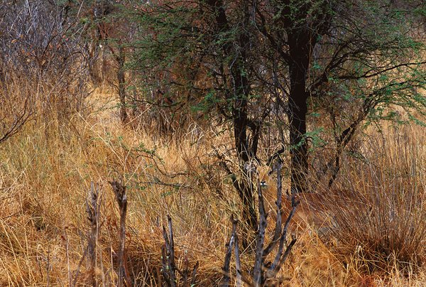 animal_camouflage_019