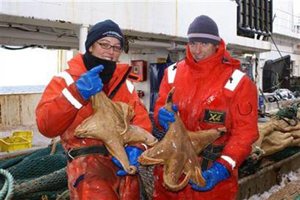 labananequiparle-Etoiles de mer géantes