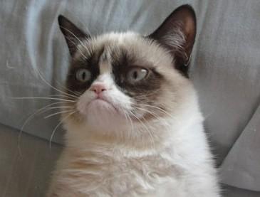 labananequiparle_Grumpy-Cat