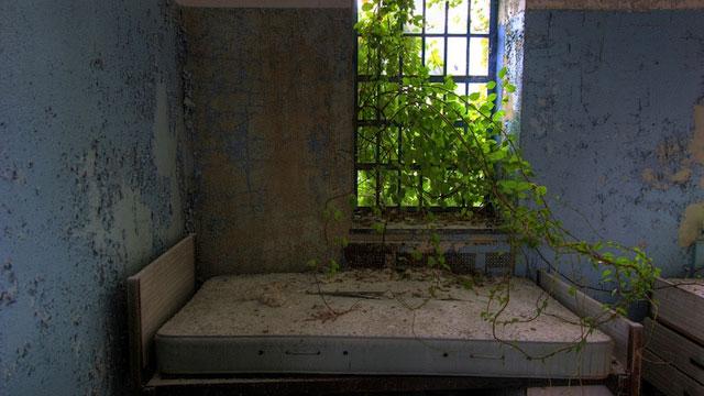 labananequiparle-asiles-abandonnes-new york-2