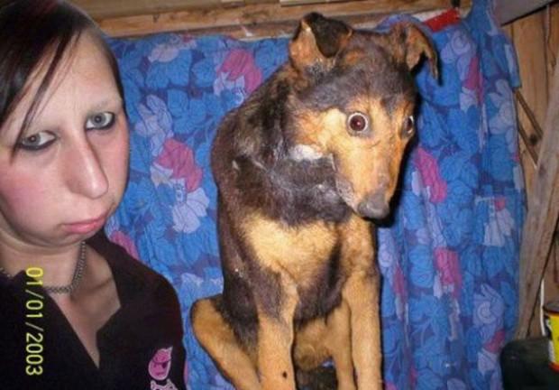 labananequiparle-tel-maitre-tel-chien-10