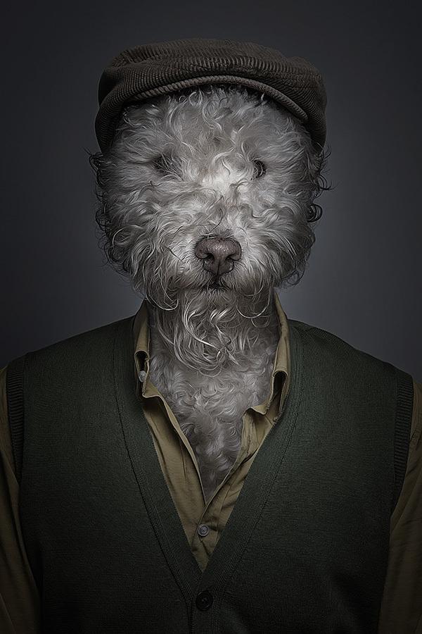 labananequiparle-tel-maitre-tel-chien-12
