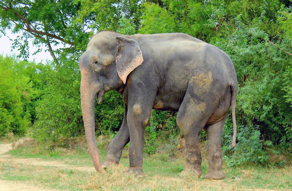 labananequiparle-elephant-pleure-inde-1