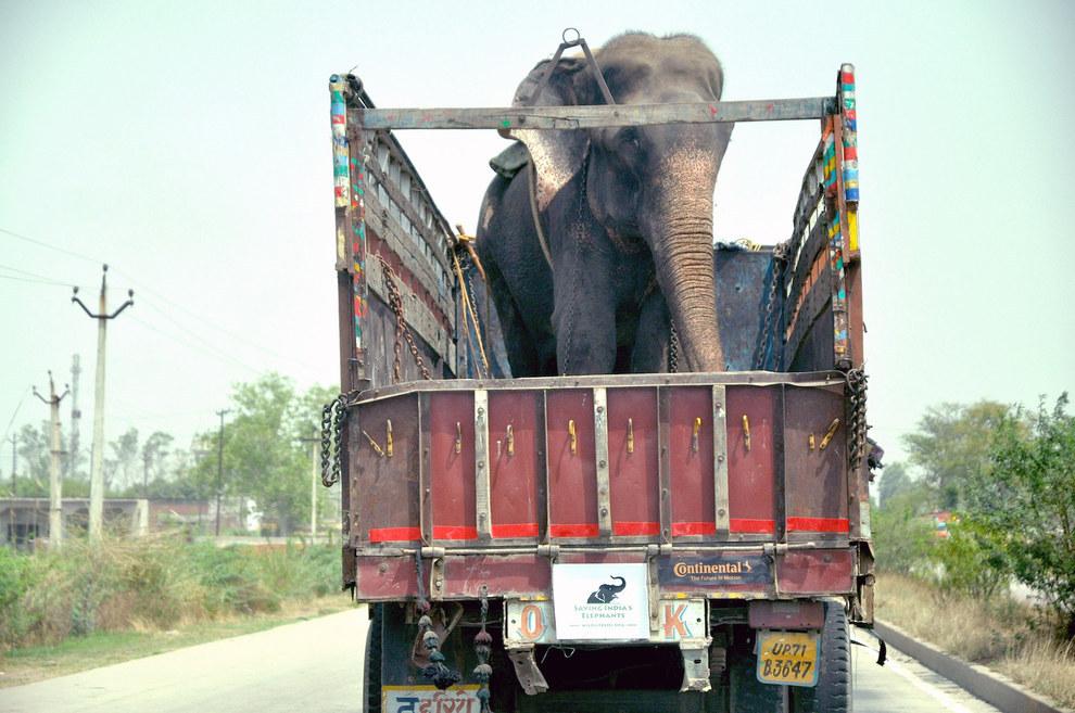 labananequiparle-elephant-pleure-inde-3