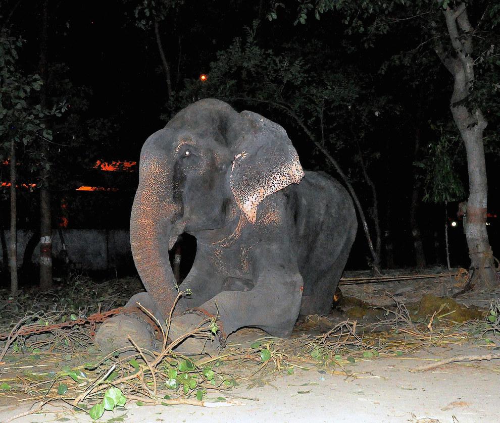 labananequiparle-elephant-pleure-inde-4