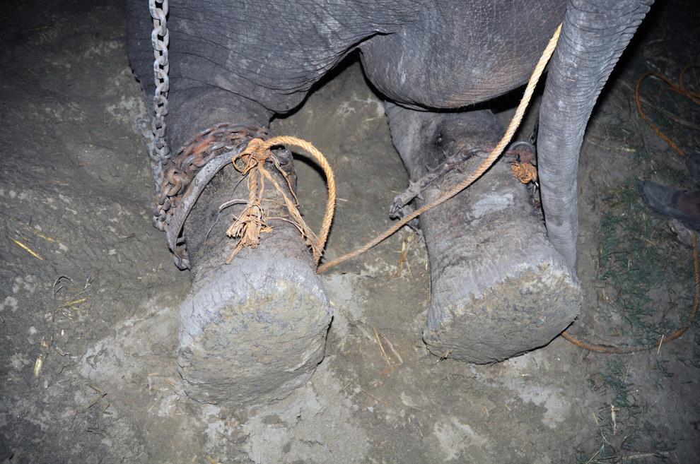 labananequiparle-elephant-pleure-inde-6