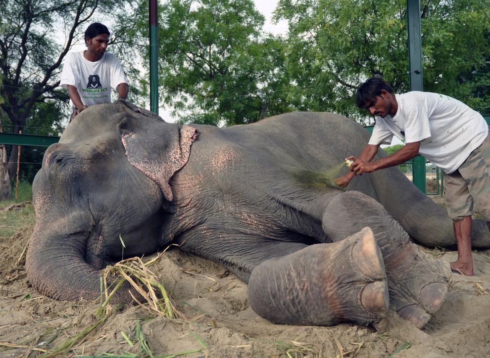 labananequiparle-elephant-pleure-inde-7