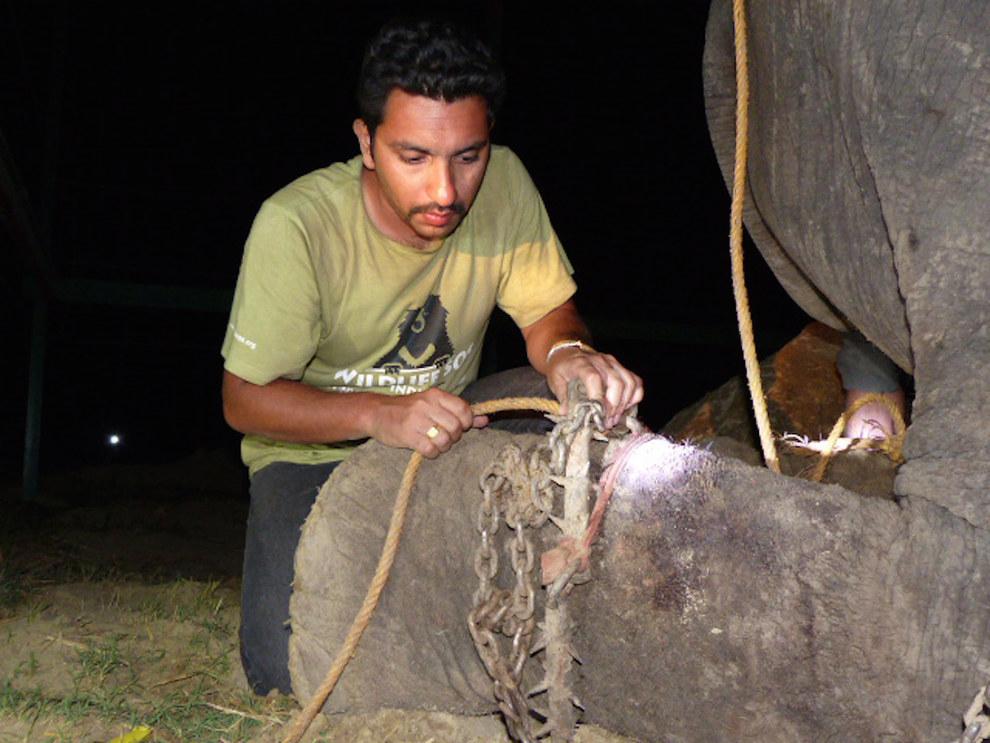 labananequiparle-elephant-pleure-inde-8