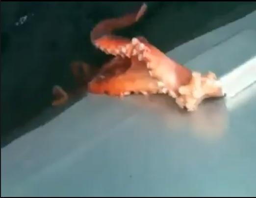 labananequiparle-poulpe-bateau-echappe-2