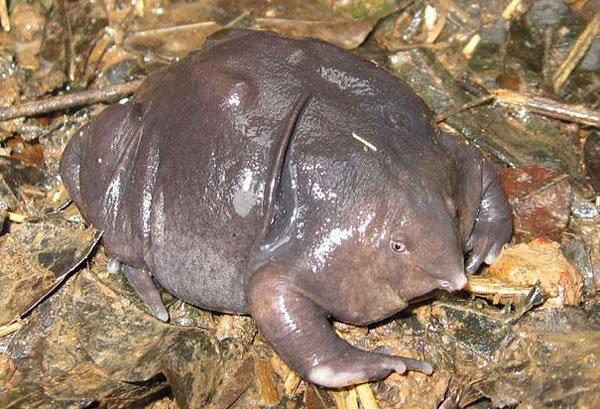 labananequiparle-tortue-indienne-violette