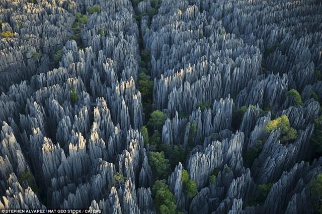 Labananequiparle-Forêt de pierres-Madagascar