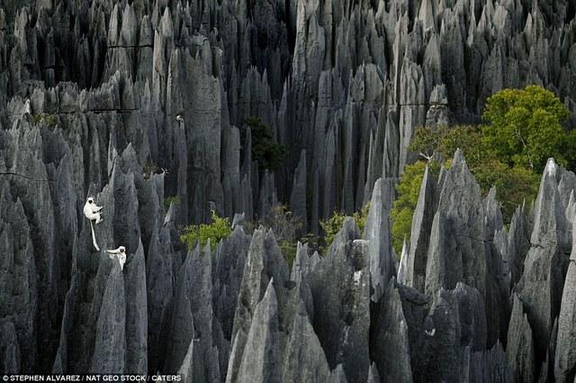 Labananequiparle-Forêt de pierres-Madagascar3
