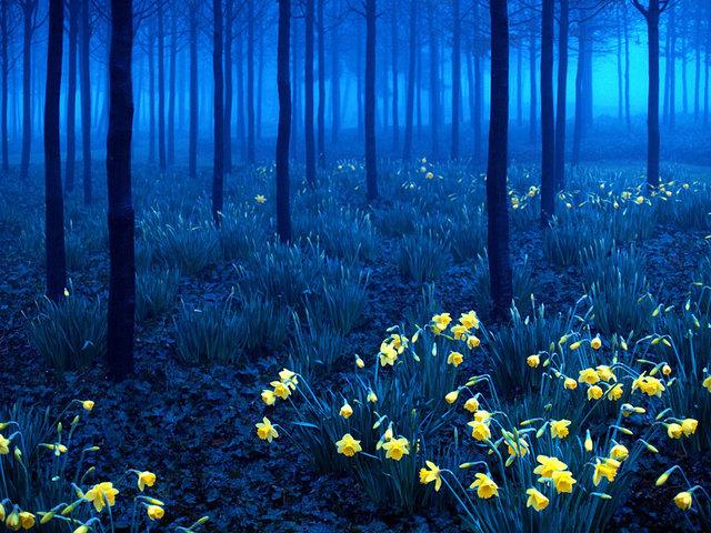 Labananequiparle-Forêt noire-Allemagne